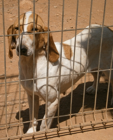 Firma por una ley contra el maltrato animal
