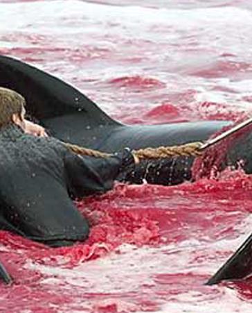 ¡Detengamos la matanza de ballenas!