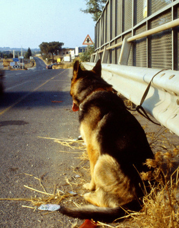 No al abandono de animales en temporada de verano