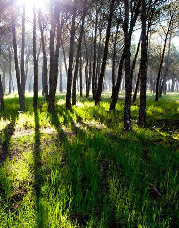 Doñana es Patrimonio de la Humanidad y no un almacén de gas
