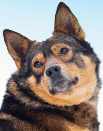 Di NO al estreno de 'A Dog's Purpose' por maltratar a sus perros