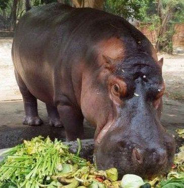 Cierre del zoológico de El Salvador