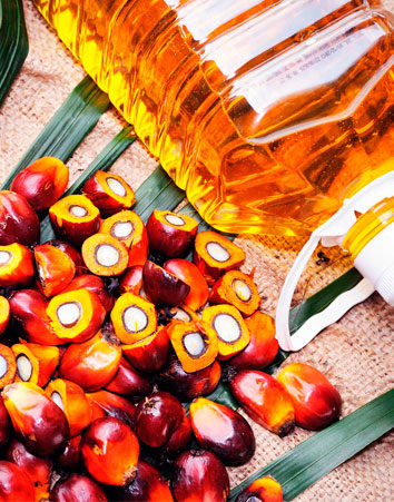 No queremos más aceite de palma en nuestros productos