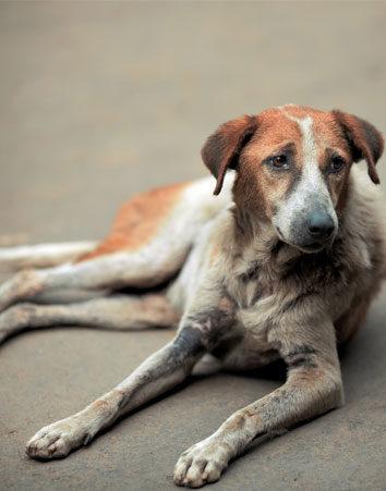 Penas más duras para los organizadores de peleas de perros