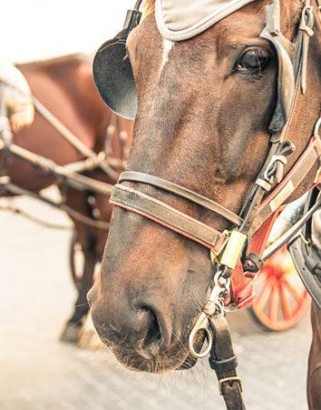 Firma para acabar con la explotación de caballos en las ferias