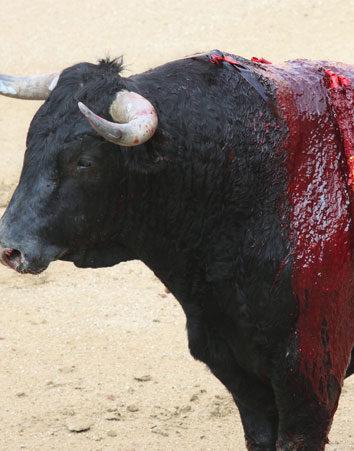 No permitas que bajen el IVA a las corridas de toros