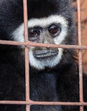 ¡Basta ya! Firma para prohibir el cautiverio de animales
