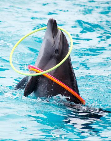 No a los delfinarios. ¡Firma y salvalos del cautiverio!