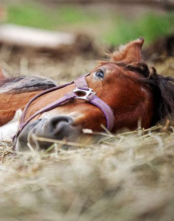 No dejes que mueran más caballos en Romerías y Ferias
