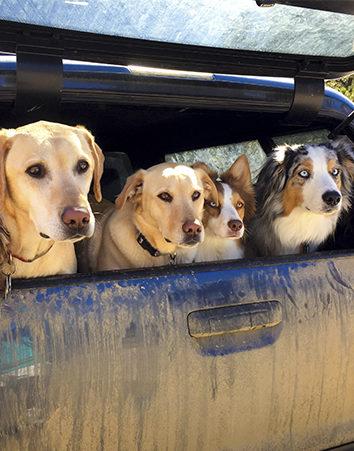 ¡Firma por más perreras en Madrid! Se están desbordando